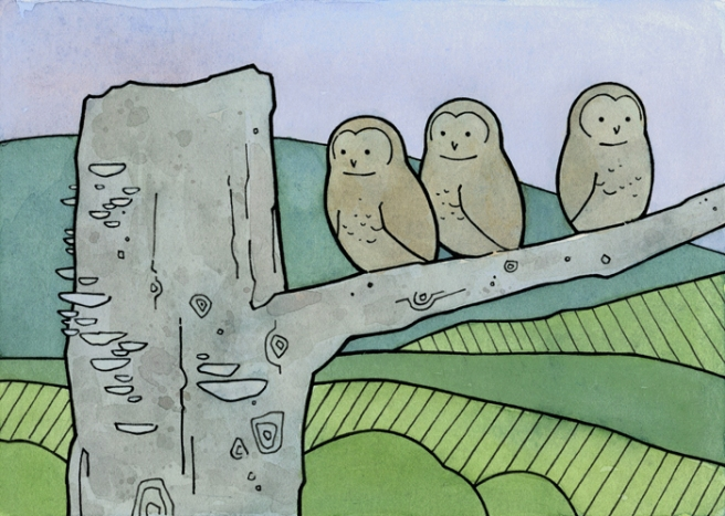owlet illustration
