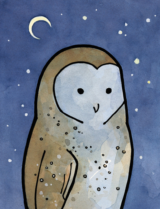 barn owl illustration