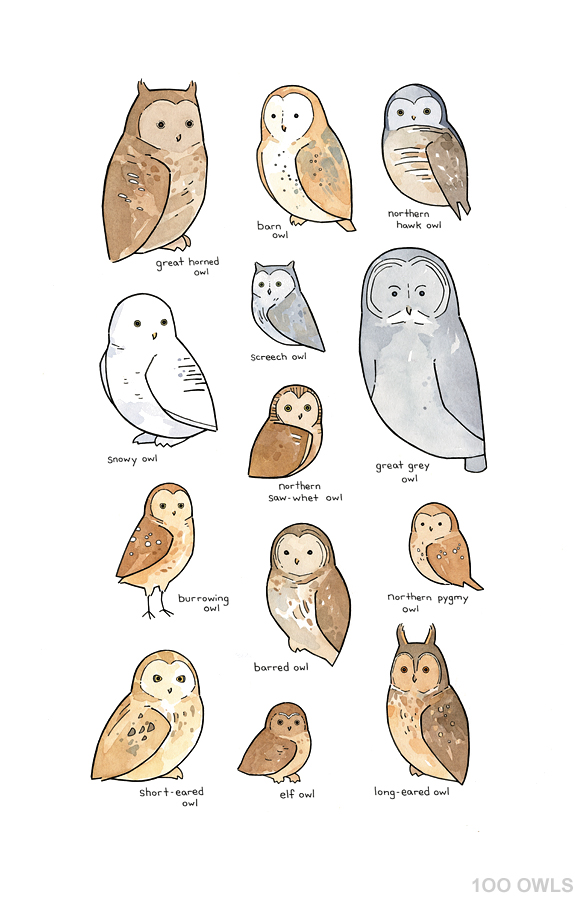 owl chart illustration