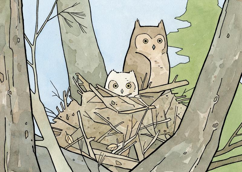 Owl Nest Owl 38 Owlet in Nest