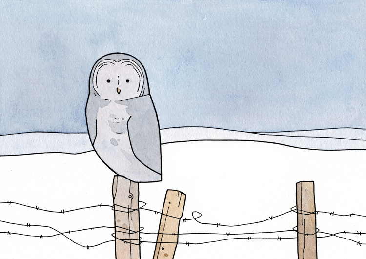 Simple Barbed Wire Drawing snow | 100 owls
